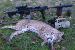 Texas Matt harvested this feline in East Texas.