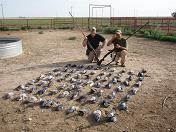 Gadget Bob and Lone Star Phil with 72 pigeons taken from horse pens.  The metro guns don't spook the horses, even a close range.